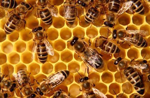 honey-bee-control-service-500×500-1
