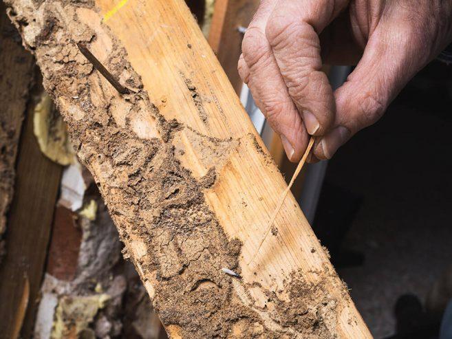 termite-control-2